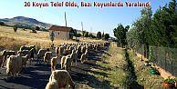 TRAFİK KAZASINDA 20 KÜÇÜKBAŞ HAYVAN TELEF OLDU