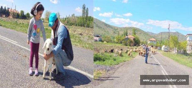 Arguvan'da Yayla Sezonu Başladı